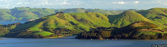 Otago Peninsula, Otago, New Zealand