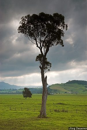 Australia, New South Wales, Kiama, sky, dark clouds, green, tree
