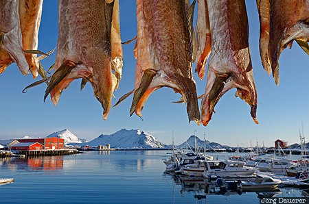 Ballstad, NOR, Nordland, Norway, back lit, boats, fish