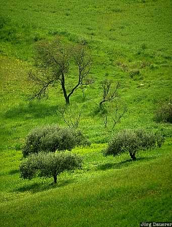 meadow, green, trees, Sicily, Italy, Mediterranean, Sizilien