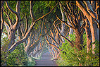 Armoy, GBR, Gracehill, Northern Ireland, United Kingdom, beech trees, Dark Hedges, Game of Thrones, green, Kingsroad, landscape, morning light, street, sunrise, tree tunnel, trees, Ballymoney, avenue of beech trees