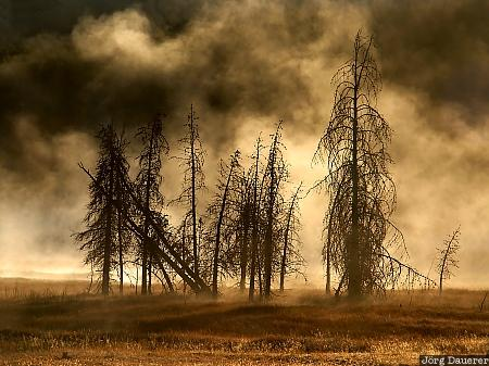 dead trees, tree, trees, fog, thermal feature, Firehole Lake Drive, Yellowstone National Park