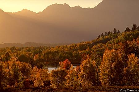 Fall colors, autumn colors, indian summer, leaves, Grand Teton National Park, Wyoming