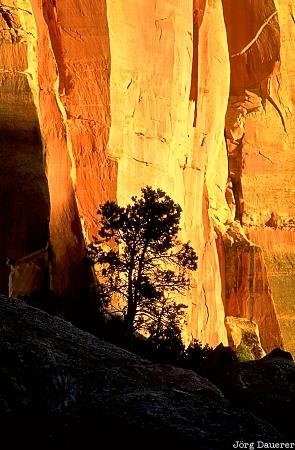 Capitol Reef National Park, tree, sunset, silhouette, Utah, United States, evening light